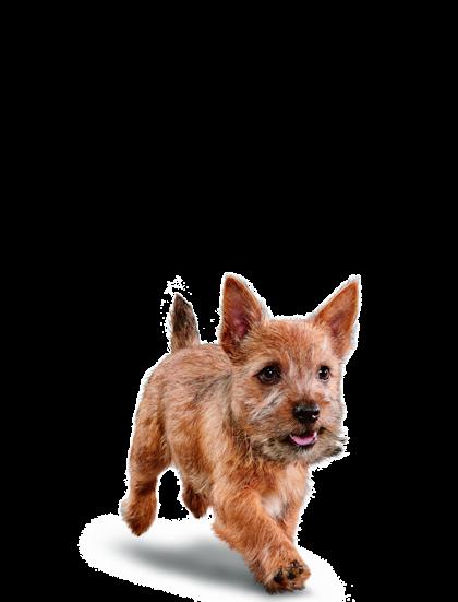 Eukanuba - Puppy Small Breed - Facing Illustration (2019 Restage)