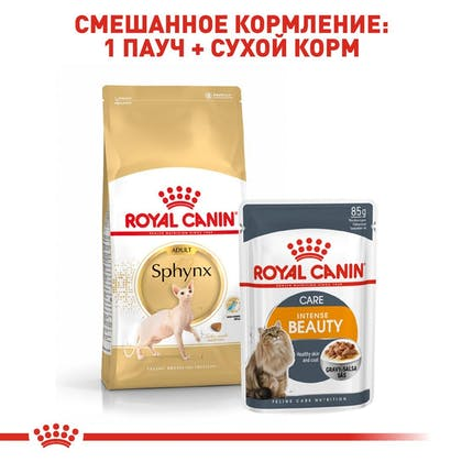 RC-FBN-Sphynx_5-RU.jpg