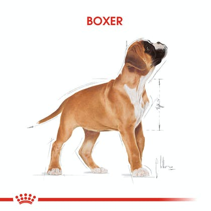Royal Canin Boxer Puppy Yavru Köpek Maması 1