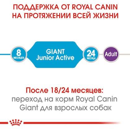 HI_SHN_GIANT_JUNIOR ACTIVE_ru_1