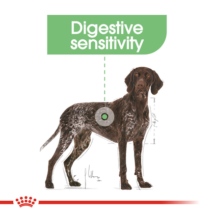 CCN-DigestiveMaxi-CV-Eretailkit-2