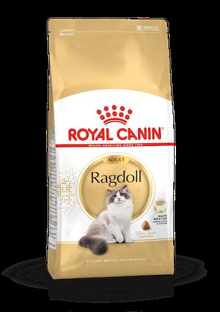 Ragdoll Adulte