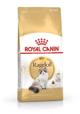 Ragdoll Adult