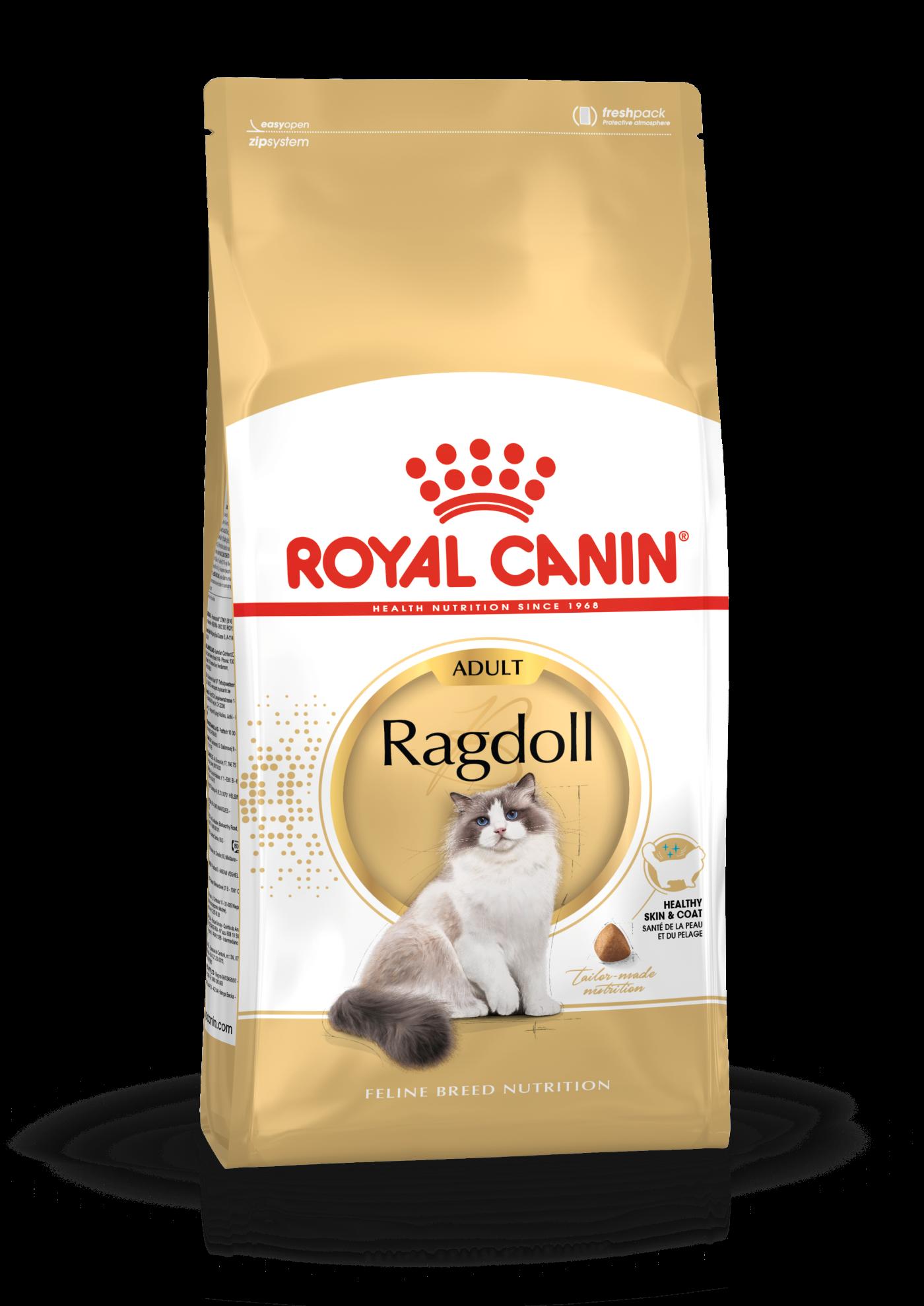 British Shorthair Adult Dry Royal Canin