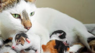 Mother cat and young kittens sitting together