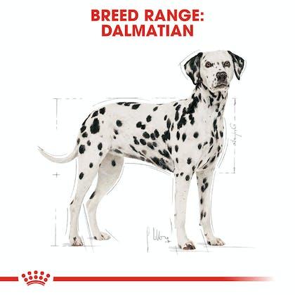 BHN-Dalmatian-CV-Eretailkit-1