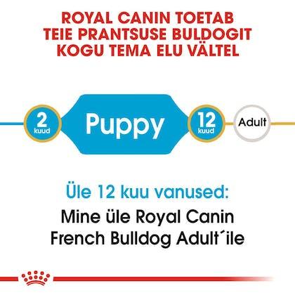 RC-BHN-PuppyFrenchBulldog-CM-EretailKit-1-et_EE