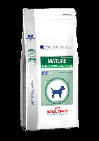 Small Dog Senior Consult Mature