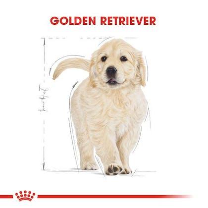 Royal Canin Golden Retriever Puppy Yavru Köpek Maması 1