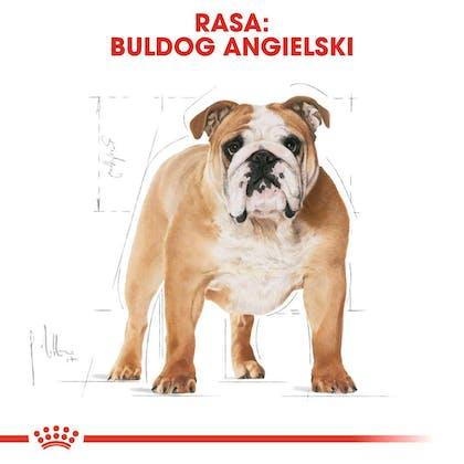 RC-BHN-Bulldog-CV-Eretailkit-1-pl_PL