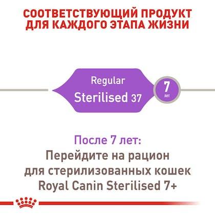 RC-FHN-Sterilised37_2-RU.jpg