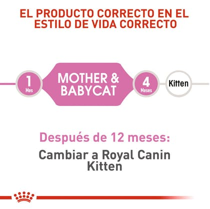MOTHER & BABYCAT COLOMBIA 3
