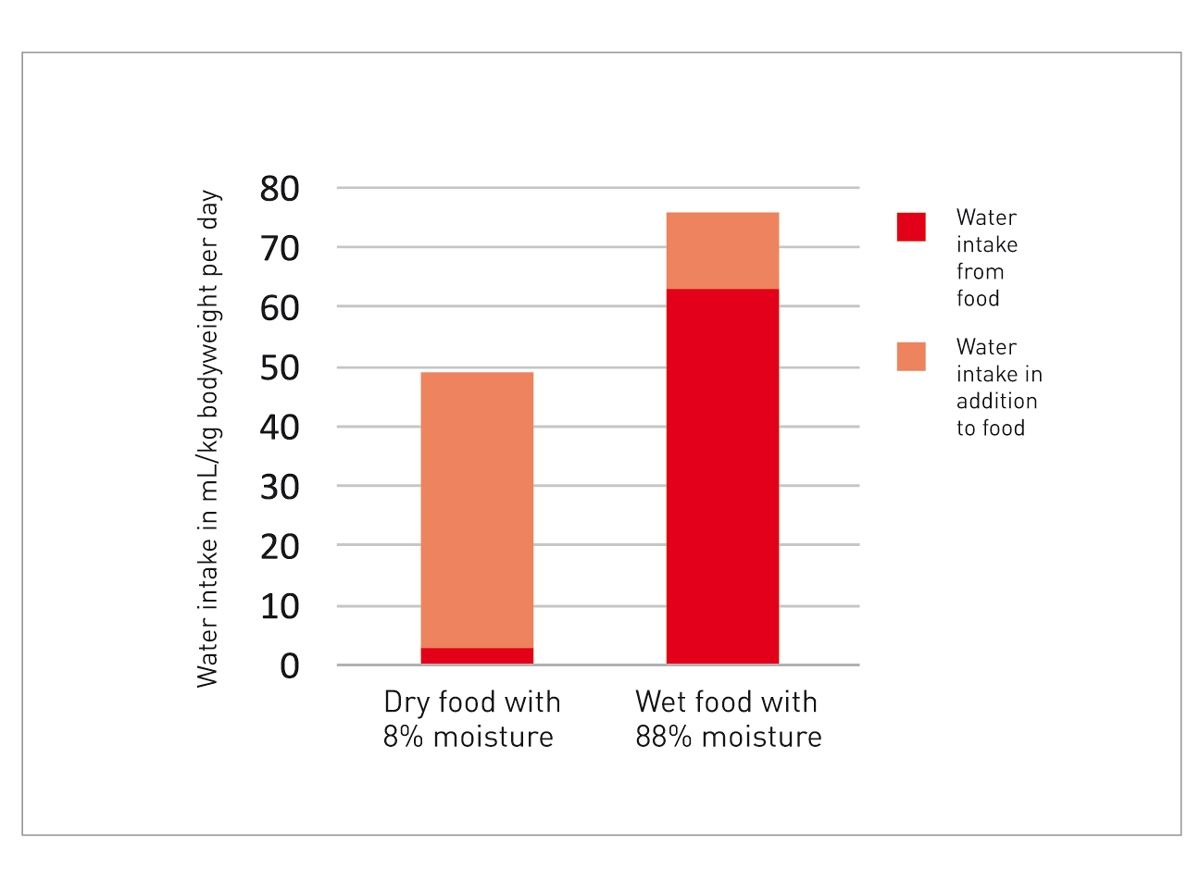 Spożycie płynów przez koty żywione karmą suchą i mokrą 8 Dzienne spożycie wody w ml na kg masy ciała kota Spożycie wody pochodzącej z karmy Dodatkowe spożycie wody Karma sucha o wilgotności 8% Karma mokra o wilgotności 88%