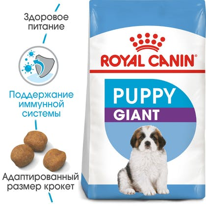 HI_SHN_GIANT_PUPPY_ru_4