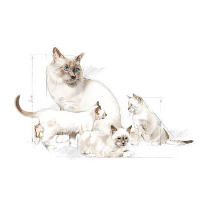 2013- REPRODUCTION PRO- Packaging Illustrations - BABYDOG Milk and BABYCAT Milk
