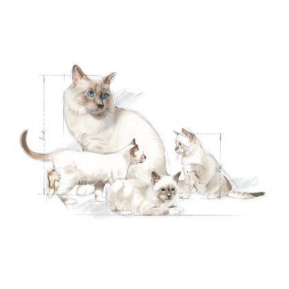 2013- REPRODUCTION PRO- Packaging Illustrations - BABYDOG Milk and BABYCAT Milk