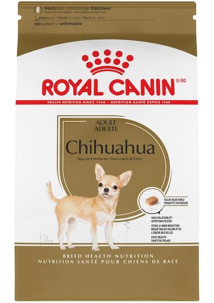 Chihuahua_Adult_1