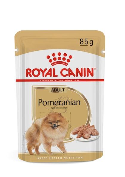 165-BR-L-Pomeranian-Wet-Pomeranian-Breed-content