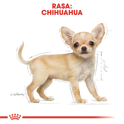 RC-BHN-PuppyChihuahua-CM-EretailKit-4-pl_PL