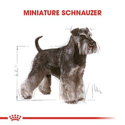 Royal Canin Miniature Schnauzer Adult Köpek Maması 1