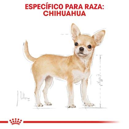 RC-BHN-Chihuahua-CV-Eretailkit-1