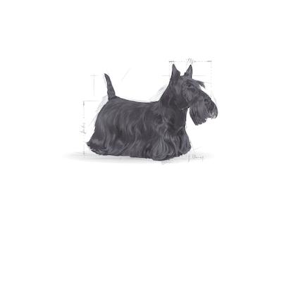X-SMALL & MINI - Pack illustrations - MI-DERM-SHN-ILLUSTR