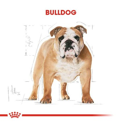 Royal Canin Bulldog Adult Köpek Maması 1