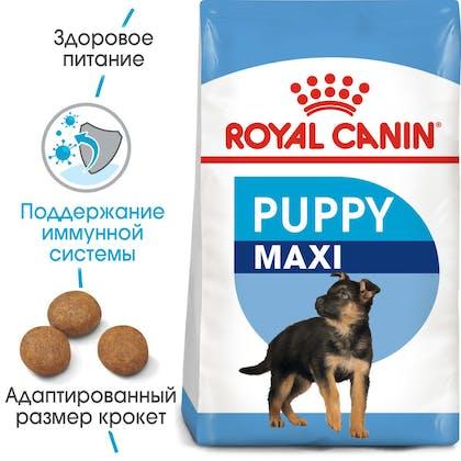 HI_SHN_MAXI_PUPPY_ru_4