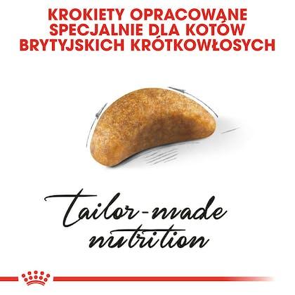 RC-FBN-KittenBritishShorthair-CV3_017_POLAND-POLISH