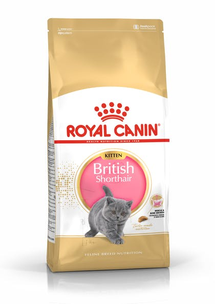 FBN2016_PACKSHOT_BRITISH SHORTHAIR_KITTEN