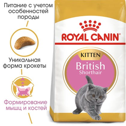 HI_FBN_BRITISH SHORTHAIR KITTEN_ru_4
