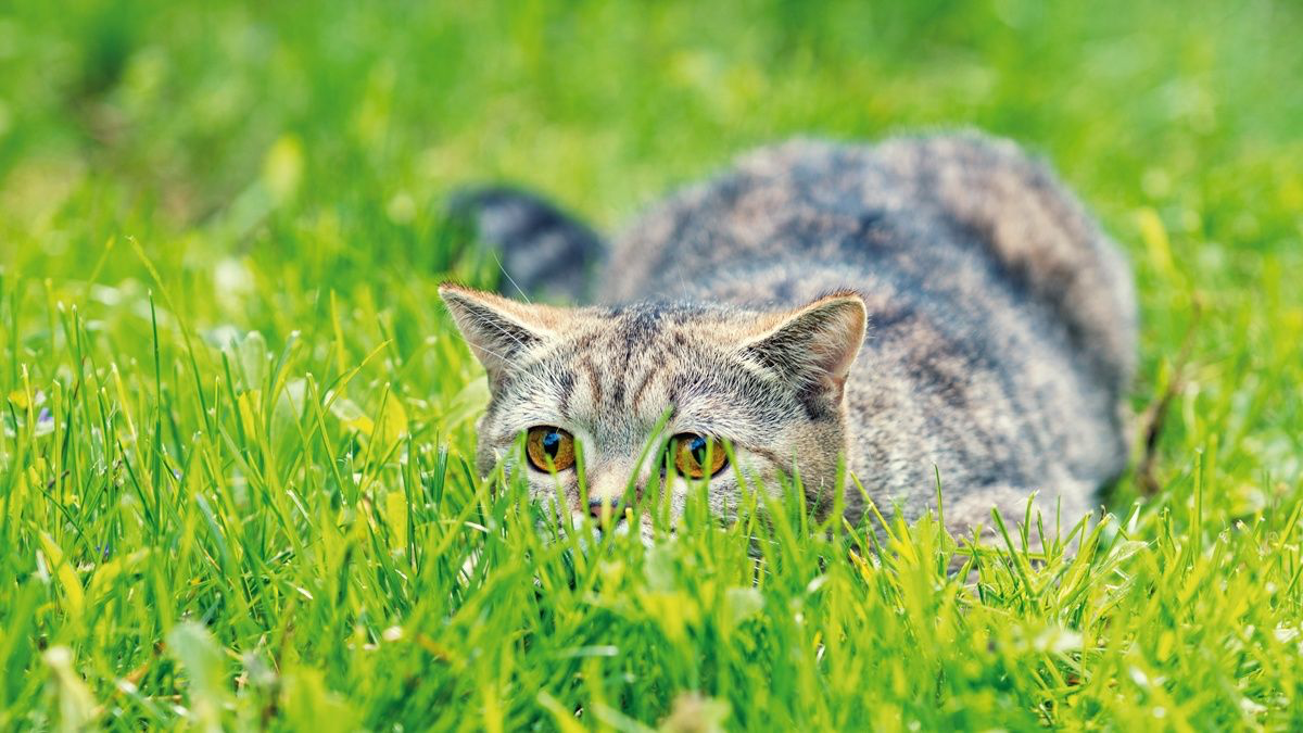 Feeding behavior in cats