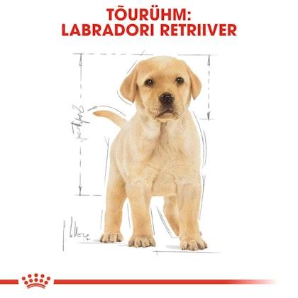 RC-BHN-PuppyLabradorRetriever-CM-EretailKit-4-et_EE