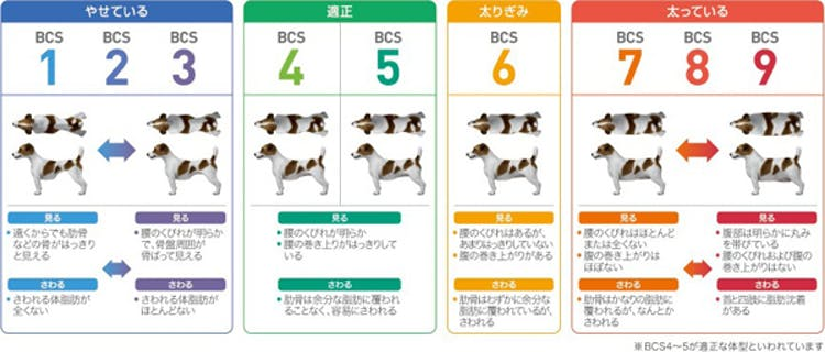 57_Japan_local_FAQ_Body condition score for Dog.jpg