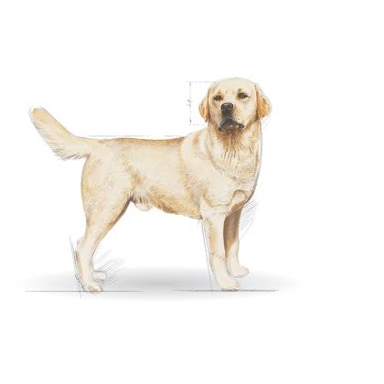 BHN 2013 - Part 2 - Emblematic pets pictures - LAB-AD-BHN-ILLUSTR