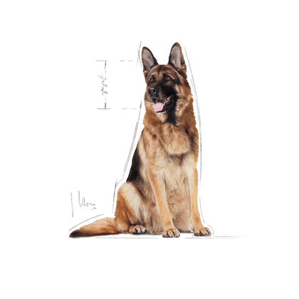 MAXI ADULT 5-ILLUSTR-FACING-SHN17