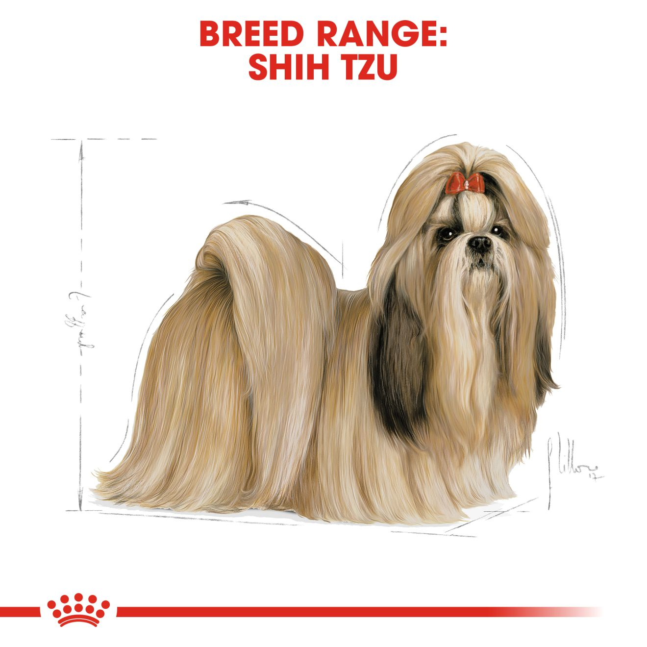 Shih Tzu Adult Kering Royal Canin