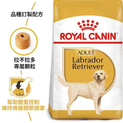 BHN_Labrador