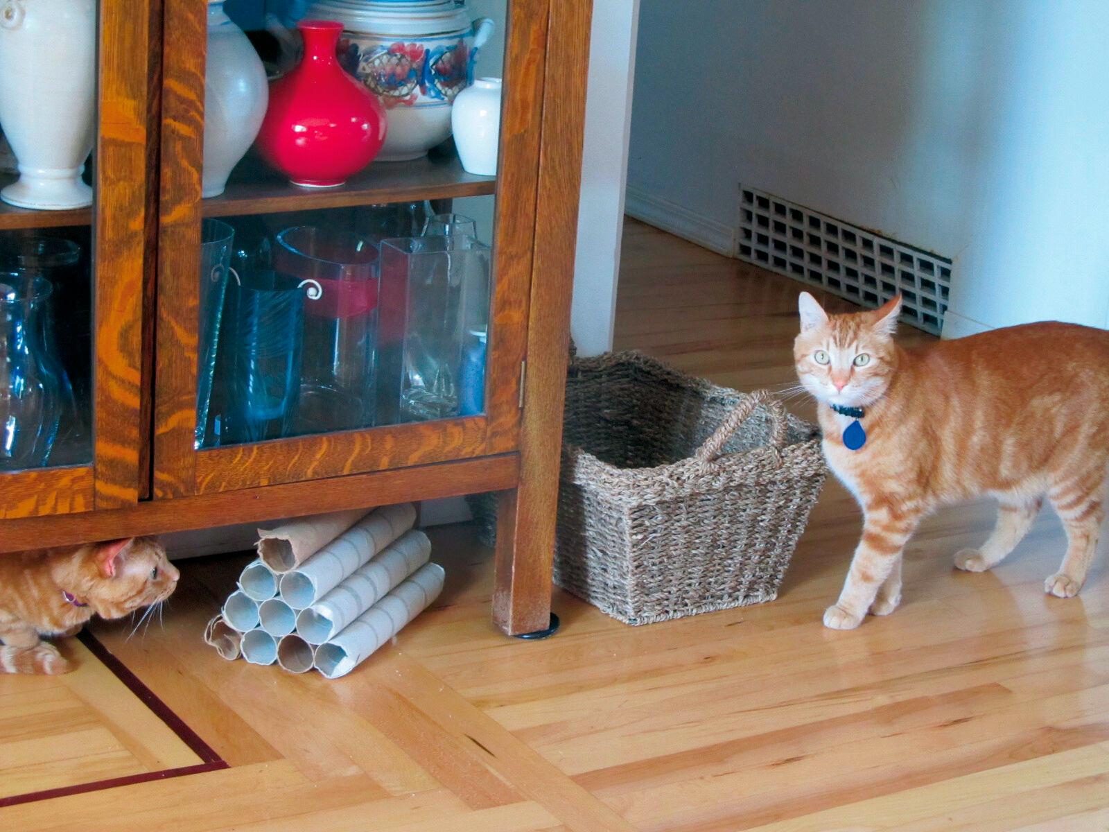 Figura 3. Nascondersi è un comportamento di adattamento essenziale per i gatti, ma in un nucleo familiare è fondamentale che il gatto non si senta in trappola.