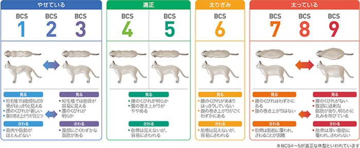 59_Japan_local_FAQ_Body condition score for Cat.jpg