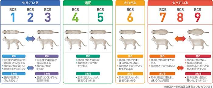 59_Japan_local_FAQ_Body condition score for Cat.jpg