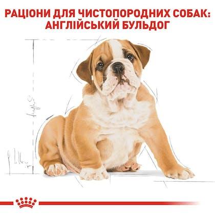 RC-BHN-PuppyBulldog_5-UA.jpg
