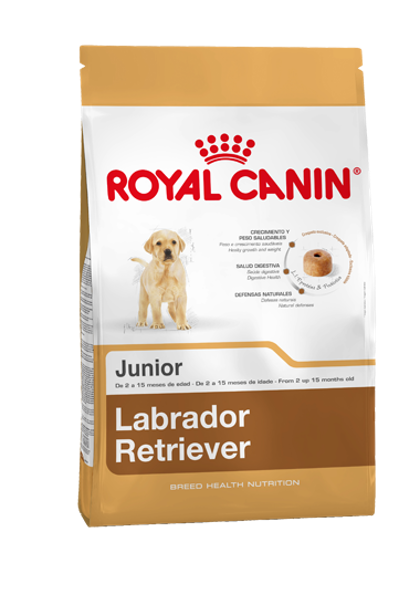AR-L-Producto-Labrador-Retriever-Junior-Breed-Health-Nutrition-Seco