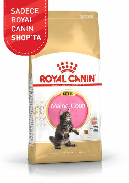 Royal Canin Yavru Kedi Maması Maine Coon Kitten