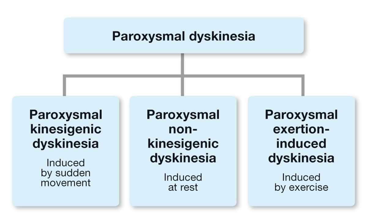 Various types of paroxysmal dyskinesia have been described in dogs, and it can be useful to classify these according to the inciting cause.