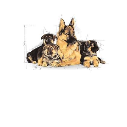 SHN- STARTER POS 2012- Emblematic pets pictures - MA-STA-SHN-ILLUSTR