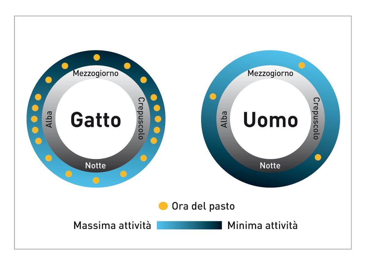 Gli schemi di attività e quelli alimentari dei gatti e dell'uomo differiscono in modo significativo, come mostra questo diagramma.