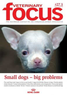 Small dogs – big problems