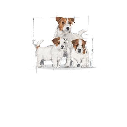SHN- STARTER POS 2012- Emblematic pets pictures - MI-STA-SHN-ILLUSTR