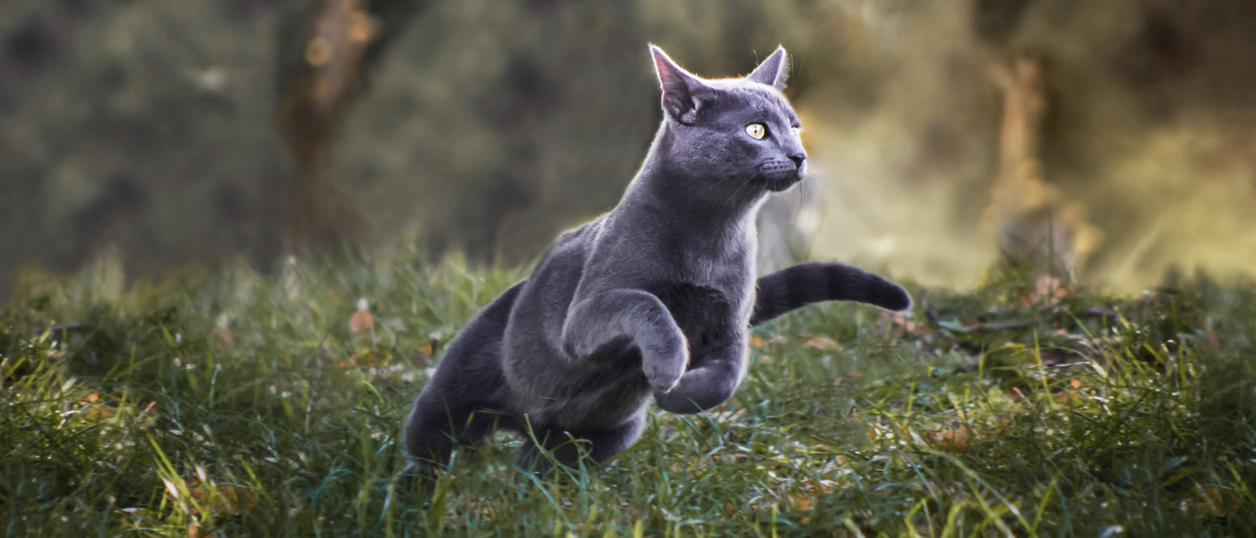 keeping your cat at a healthy weight - royal canin